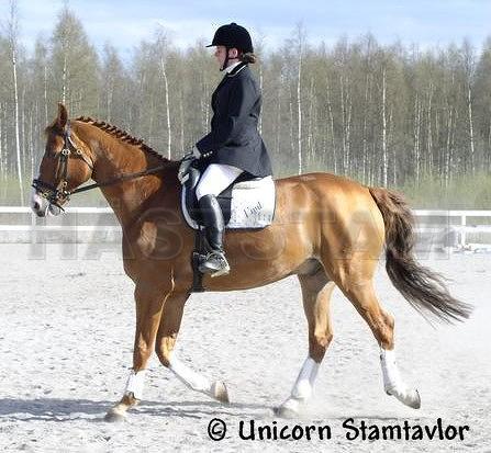 häst utan stamtavla